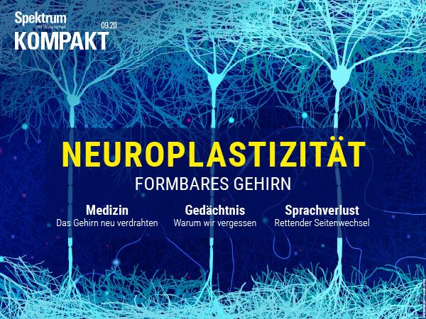 Neuroplastizität: Formbares Gehirn – Spektrum Kompakt – Hörbuch